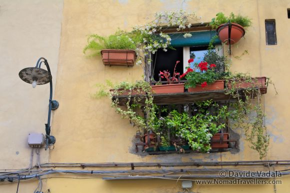 Window in Lucca, Italy