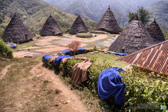 Visiting Wae Rebo in Flores Island: our  experience