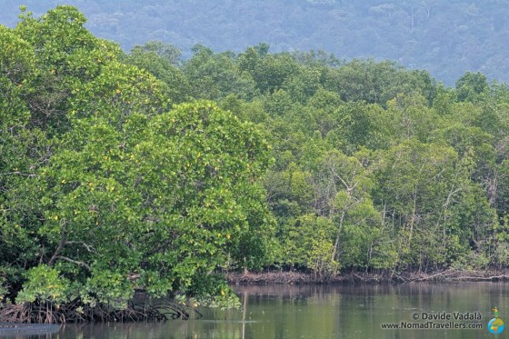 Kayak tour in Langkawi, discovering the mangroves and its fauna