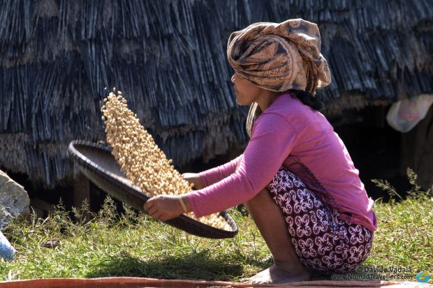 Local female villager processing the coffee beans