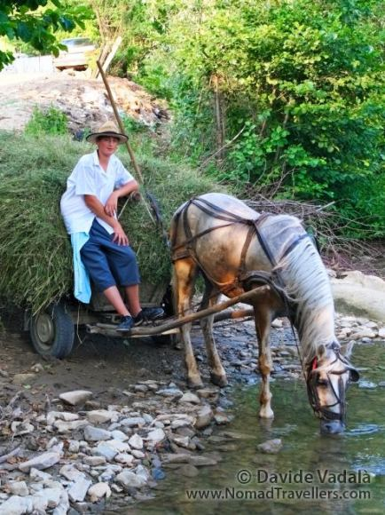 Traditional scene with an horse drinking from a stream
