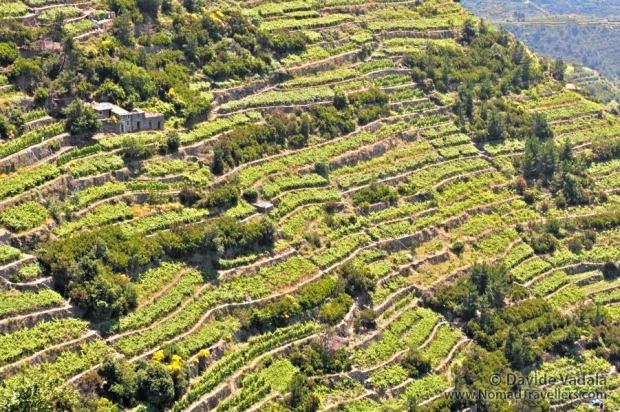 Vineyards in Cinque Terre, an idyllic view