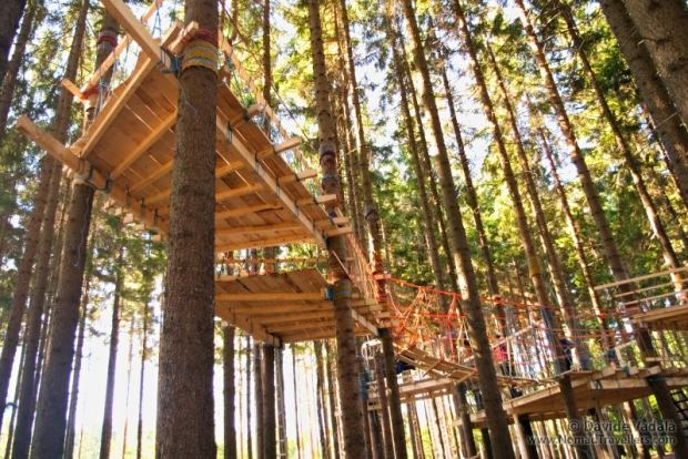 The completed tree house seen from the bottom